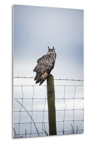 Indian Eagle Owl (Bubo Bengalensis), Herefordshire, England, United Kingdom-Janette Hill-Metal Print