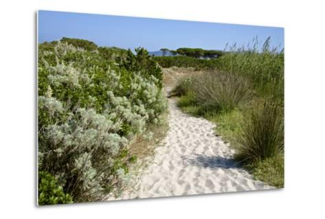Sandy Path to the Beach, Scrub Plants and Pine Trees in the Background, Costa Degli Oleandri-Guy Thouvenin-Metal Print