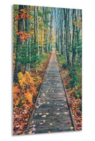 Wild Gardens Path, Acadia National Park, Maine-Vincent James-Metal Print