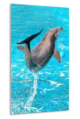 Dolphin Plays In Pool-Michal Bednarek-Metal Print
