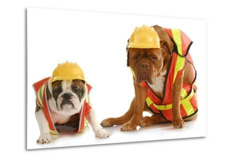 Working Dogs - English Bulldog And Dogue De Bordeaux Dressed Like Very Tire Construction Workers-Willee Cole-Metal Print