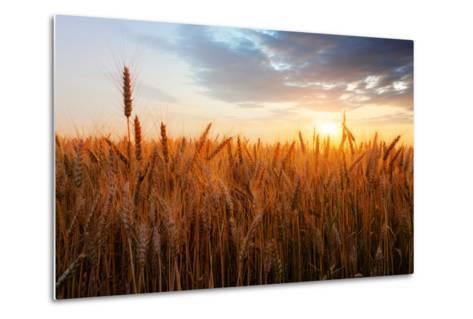 Wheat Field over Sunset-TTstudio-Metal Print
