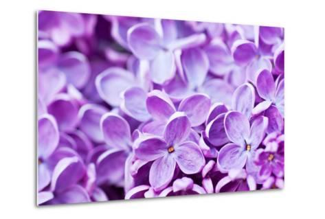 Lilac Flowers Background-Roxana_ro-Metal Print