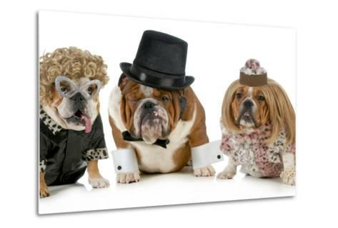 Males Bulldog With Two Females All Dressed In Formal Clothing Isolated On White Background-Willee Cole-Metal Print