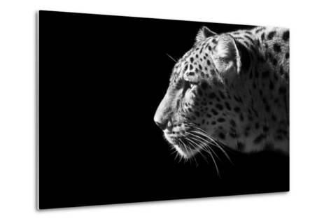 Leopard Portrait-Reddogs-Metal Print
