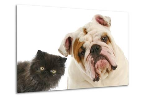 Dog And Cat-Willee Cole-Metal Print