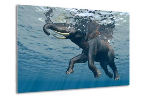 An Elephant Swims Through The Water-1971yes-Metal Print