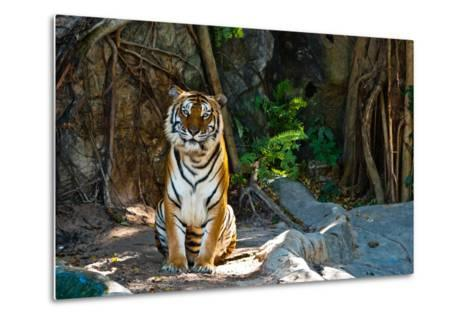 Female Wild Tiger From Thailand-sasilsolutions-Metal Print