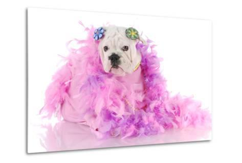 Spoiled Puppy-Willee Cole-Metal Print