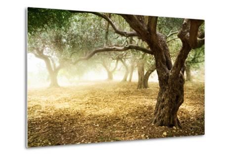 Olive Trees-Subbotina Anna-Metal Print