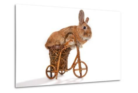 Photo Of Cute Brown Rabbit Riding Bike Isolated On White-PH.OK-Metal Print