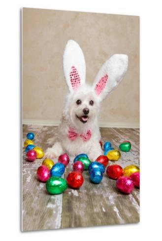 Easter Bunny Dog With Chocolate Easter Eggs-lovleah-Metal Print