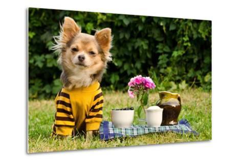 Cute Chihuahua Dog At The Picnic In Summer Garden-vitalytitov-Metal Print