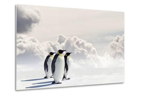 Emperor Penguins In Antarctica-Jan Martin Will-Metal Print