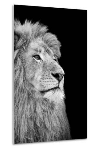 Black And White Isolated Lion Face-Snap2Art-Metal Print