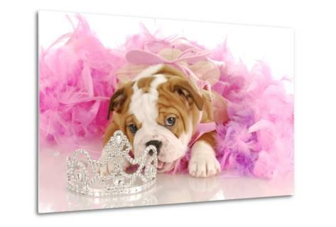 Spoiled Dog - English Bulldog Puppy Chewing On Tiara Surrounded By Pink Feathers-Willee Cole-Metal Print