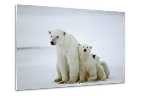 Polar She-Bear With Cubs-SURZ-Metal Print