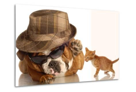 Bulldog Gangster With Kitten-Willee Cole-Metal Print