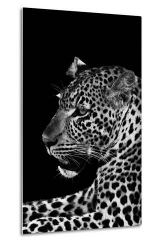 Leopard-Donvanstaden-Metal Print