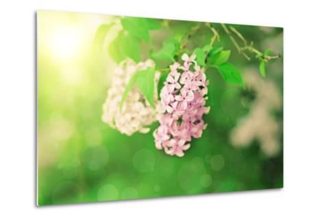 Branch of Lilac Flowers-Roxana_ro-Metal Print