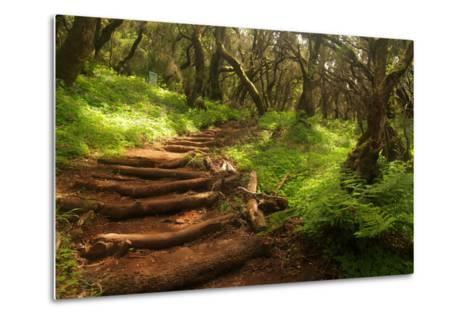Forest Stairs--Metal Print