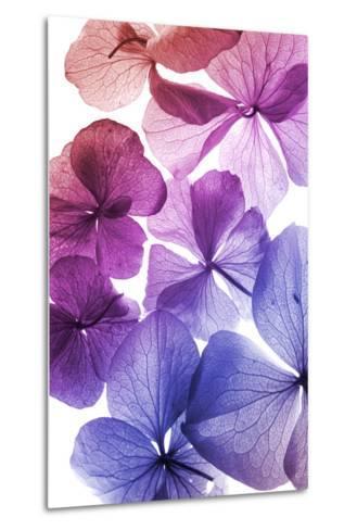 Colorful Flower Petal Closeup-maaram-Metal Print