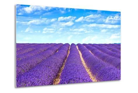 Lavender Flower Blooming Fields Endless Rows-stevanzz-Metal Print