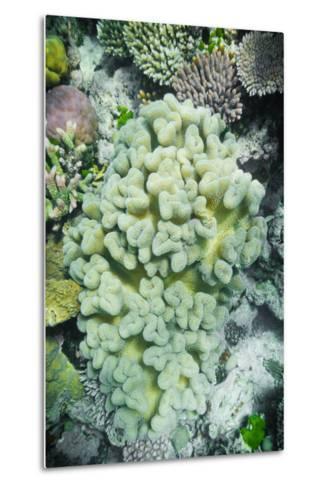 Hard and Soft Coral Reef-meisterphotos-Metal Print