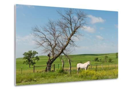 Horse-Hank Shiffman-Metal Print