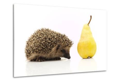 Little Hedgehog and Pear-shiffti-Metal Print