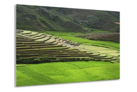 Spectacular Green Rice Field in Rainy Season, Ambalavao, Madagascar-Anthony Asael-Metal Print