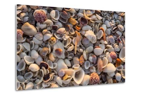 Seashells on Sanibel Island, Florida, USA-Chuck Haney-Metal Print