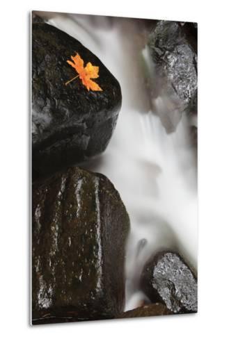 Tanner Creek, Columbia River Gorge, Oregon, USA-Jamie & Judy Wild-Metal Print