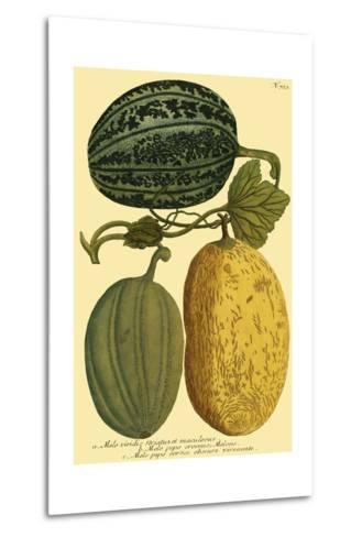Antique Melons I--Metal Print