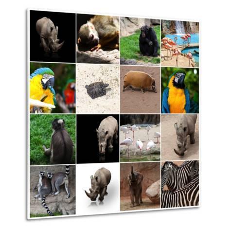 Various Wild Animals Composition-Aaron Amat-Metal Print