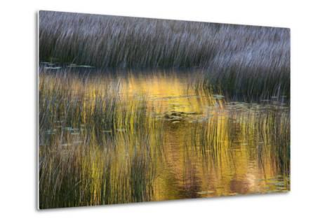 Fall Reflections in a Marsh, Acadia National Park, Maine, USA-Joanne Wells-Metal Print