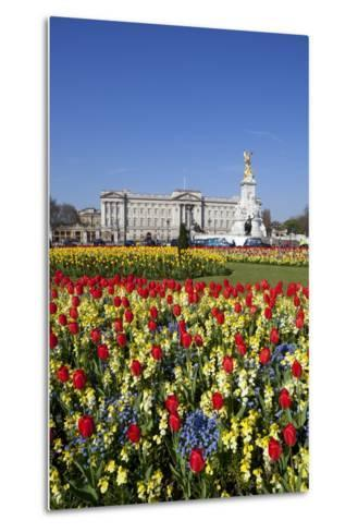 Buckingham Palace and Queen Victoria Monument with Tulips, London, England, United Kingdom, Europe-Stuart Black-Metal Print