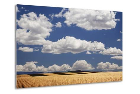 Landscape of Wheat Fields in Western Part of State, Colorado, USA-Jaynes Gallery-Metal Print