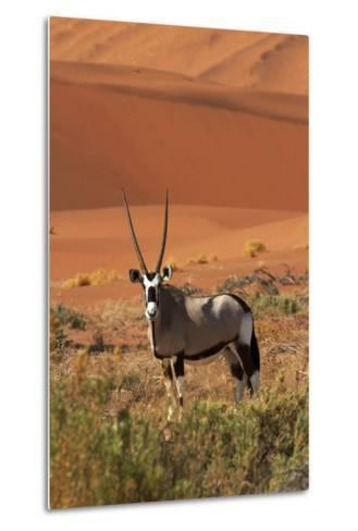 Gemsbok and Sand Dunes, Namib-Naukluft National Park, Namibia-David Wall-Metal Print