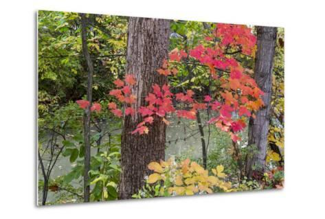 Autumn Colors at Independence State Park in Defiance, Ohio, USA-Chuck Haney-Metal Print