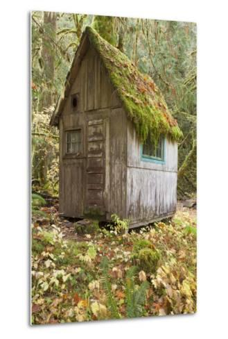 Weathered Old Cabin in Forest, Olympic National Park, Washington, USA-Jaynes Gallery-Metal Print