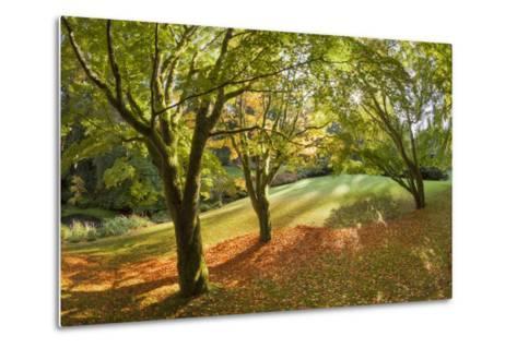 Fall Scenic on the Bloedel Reserve, Bainbridge Island, Washington, USA-Jaynes Gallery-Metal Print