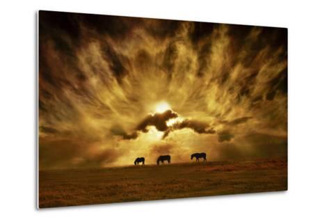 Wild Horses!-Adrian Campfield-Metal Print