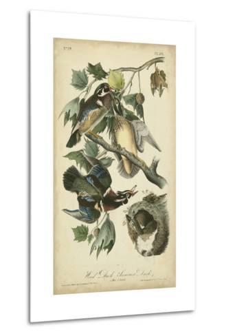 Audubon Wood Duck-John James Audubon-Metal Print
