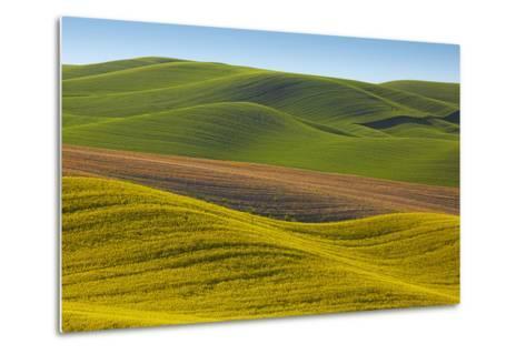 Canola Fields and Wheat, Palouse, Whitman County, Washington, USA-Charles Gurche-Metal Print