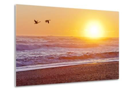 Canada Geese over Rialto Beach at Sunset, Olympic NP, Washington, USA-Jaynes Gallery-Metal Print