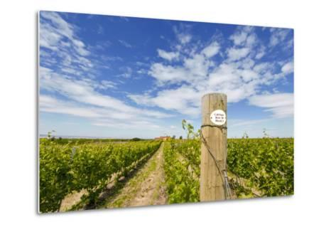 Cabernet Sauvignon Vineyards, Pepper Bridge Winery, Washington, USA-Richard Duval-Metal Print