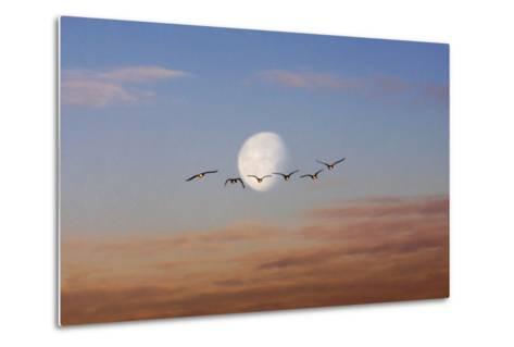 Fly Me to the Moon-Adrian Campfield-Metal Print