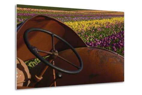 Tractor at the Tulip Festival, Woodburn, Oregon, USA-Michel Hersen-Metal Print