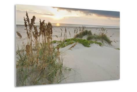 Sea Oats on Gulf of Mexico at South Padre Island, Texas, USA-Larry Ditto-Metal Print